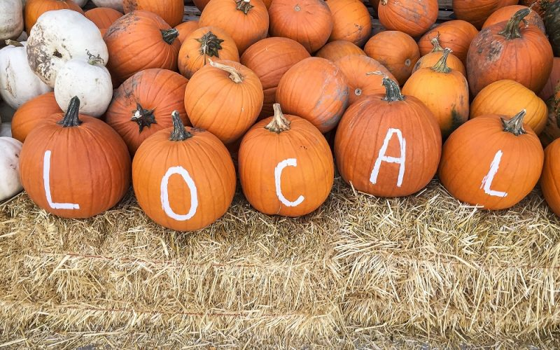 """pumpkins with """"local"""" written on them"""